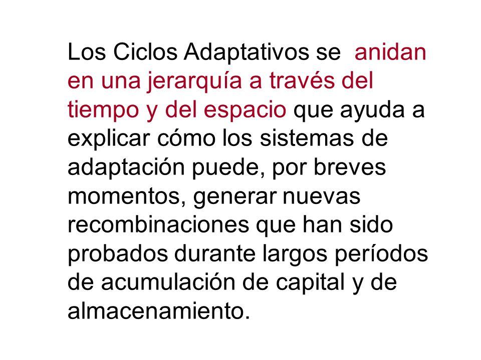 Los Ciclos Adaptativos se anidan en una jerarquía a través del tiempo y del espacio que ayuda a explicar cómo los sistemas de adaptación puede, por breves momentos, generar nuevas recombinaciones que han sido probados durante largos períodos de acumulación de capital y de almacenamiento.