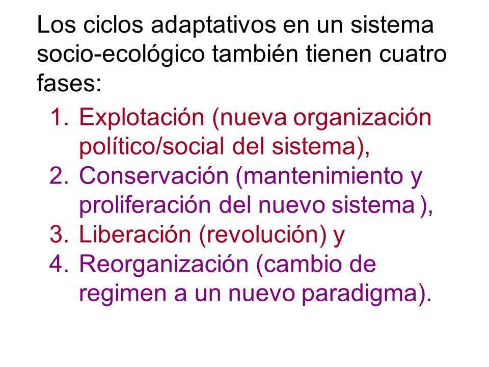 Los ciclos adaptativos en un sistema socio-ecológico también tienen cuatro fases: