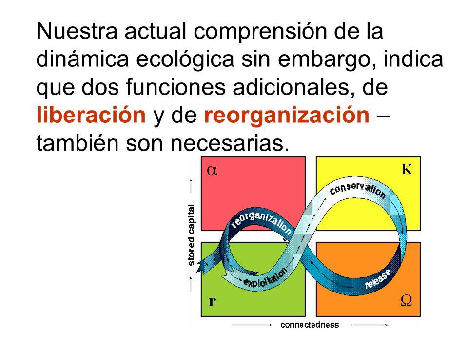 Nuestra actual comprensión de la dinámica ecológica sin embargo, indica que dos funciones adicionales, de liberación y de reorganización – también son necesarias.