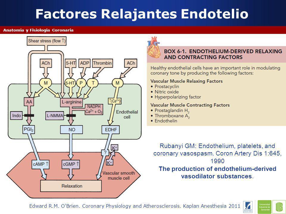 Factores Relajantes Endotelio