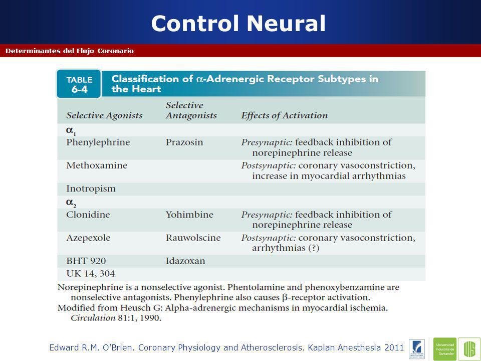 Dilatacion Beta adrenergica