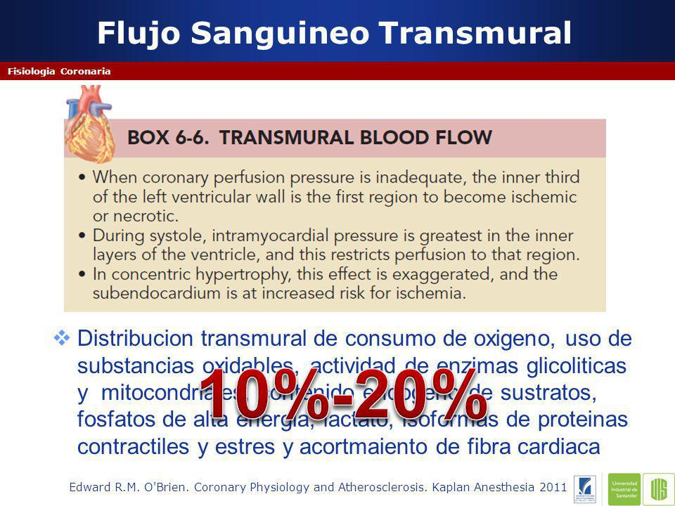 Flujo Sanguineo Transmural