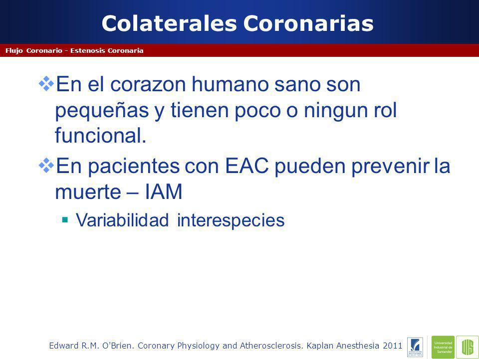 Colaterales Coronarias