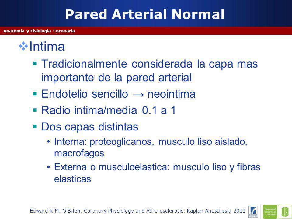 Pared Arterial Normal Intima