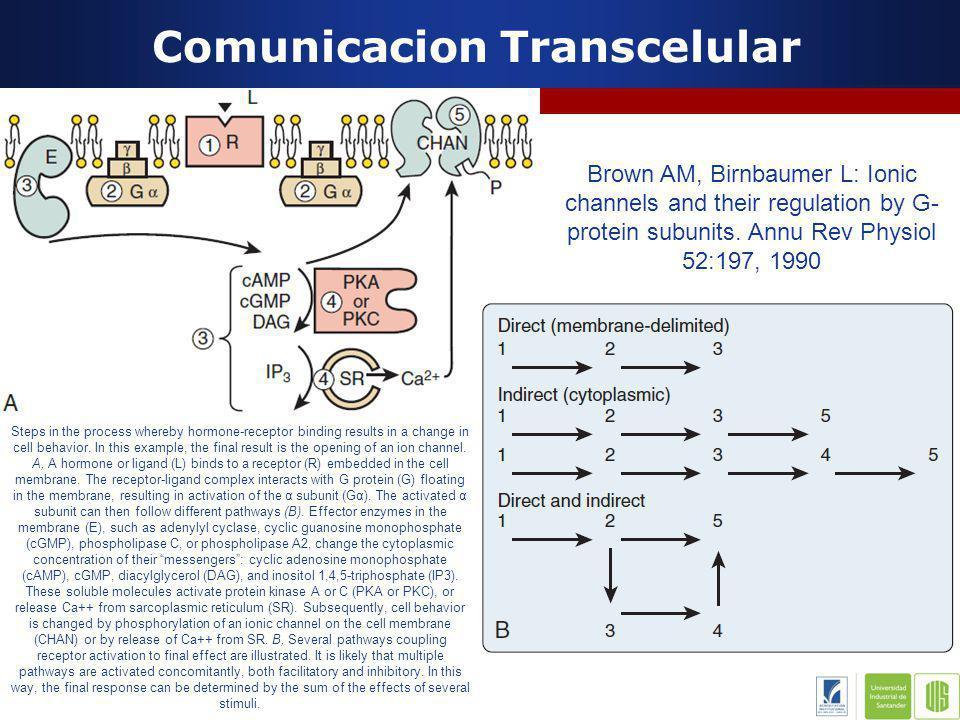 Comunicacion Transcelular