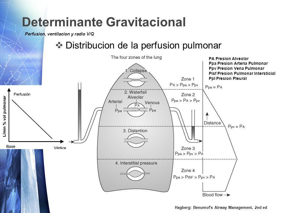 Determinante Gravitacional