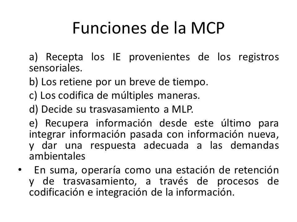 Funciones de la MCP a) Recepta los IE provenientes de los registros sensoriales. b) Los retiene por un breve de tiempo.