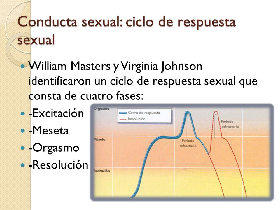 Conducta sexual: ciclo de respuesta sexual