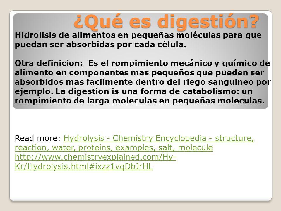 ¿Qué es digestión Hidrolisis de alimentos en pequeñas moléculas para que puedan ser absorbidas por cada célula.