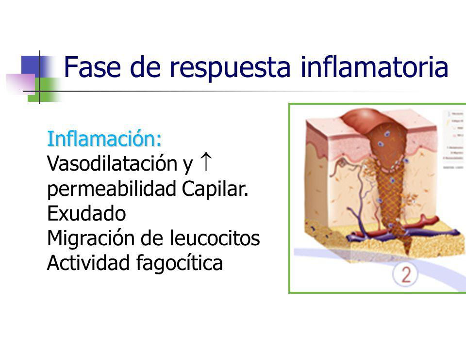 Fase de respuesta inflamatoria