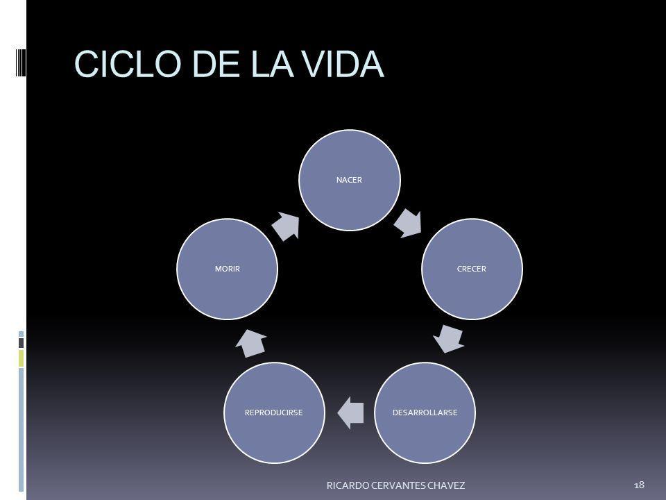 CICLO DE LA VIDA RICARDO CERVANTES CHAVEZ NACER CRECER DESARROLLARSE