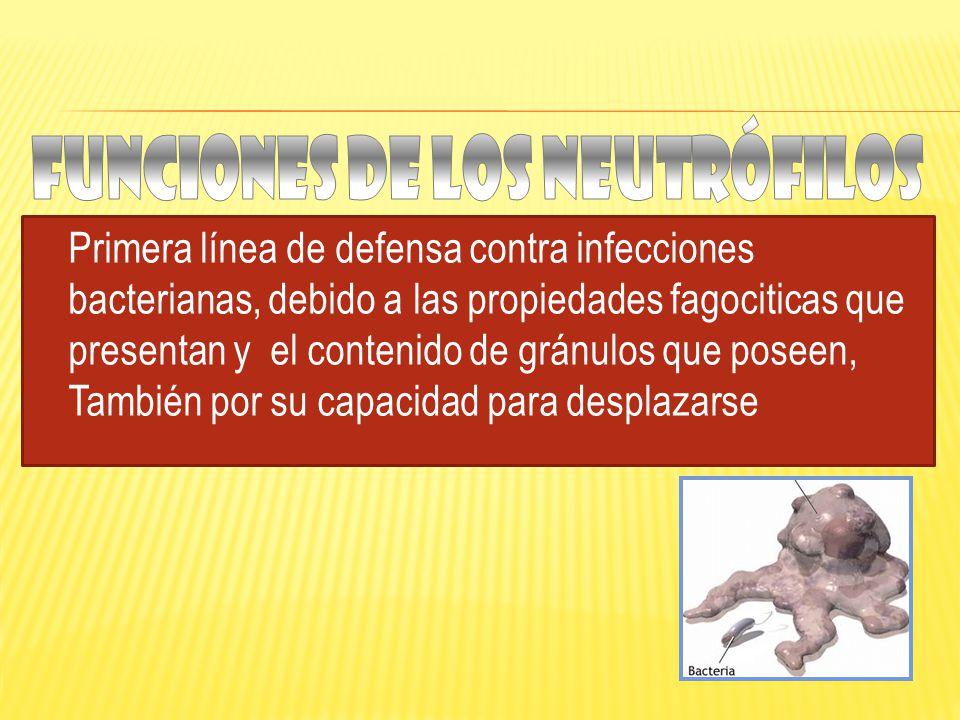 Funciones de los neutrófilos