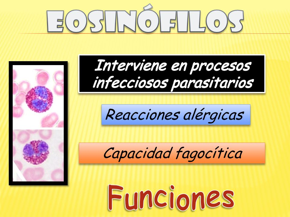Interviene en procesos infecciosos parasitarios