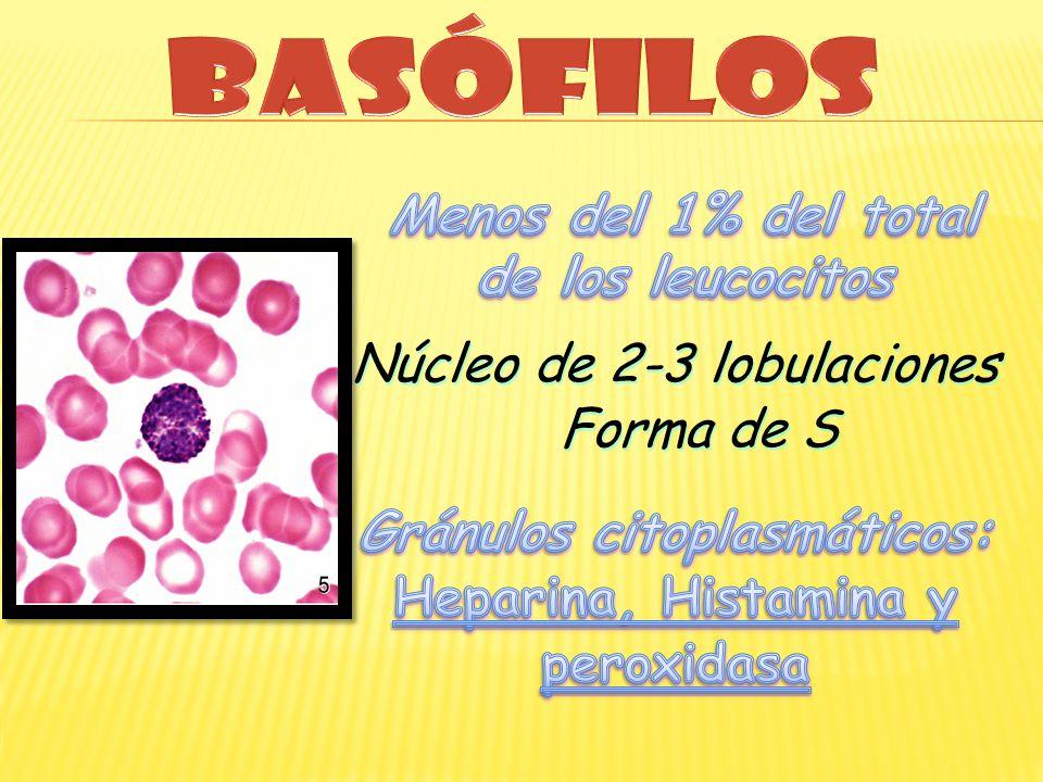 Menos del 1% del total de los leucocitos Gránulos citoplasmáticos: