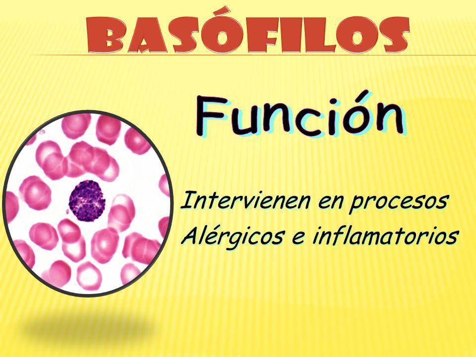 Intervienen en procesos Alérgicos e inflamatorios