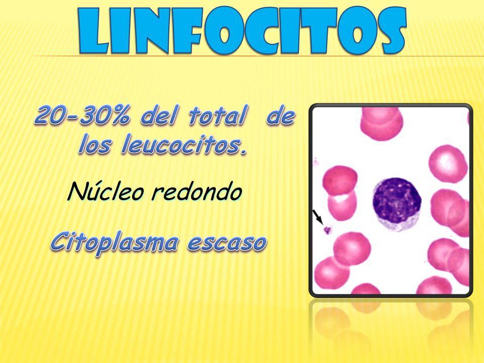 20-30% del total de los leucocitos.