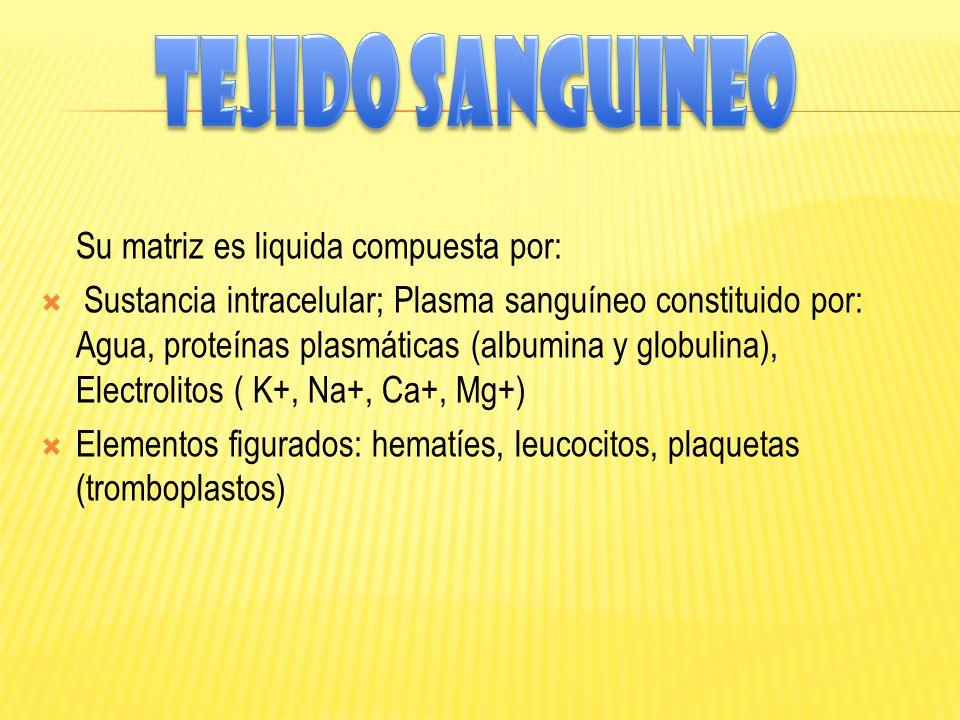 Tejido sanguineo Su matriz es liquida compuesta por: