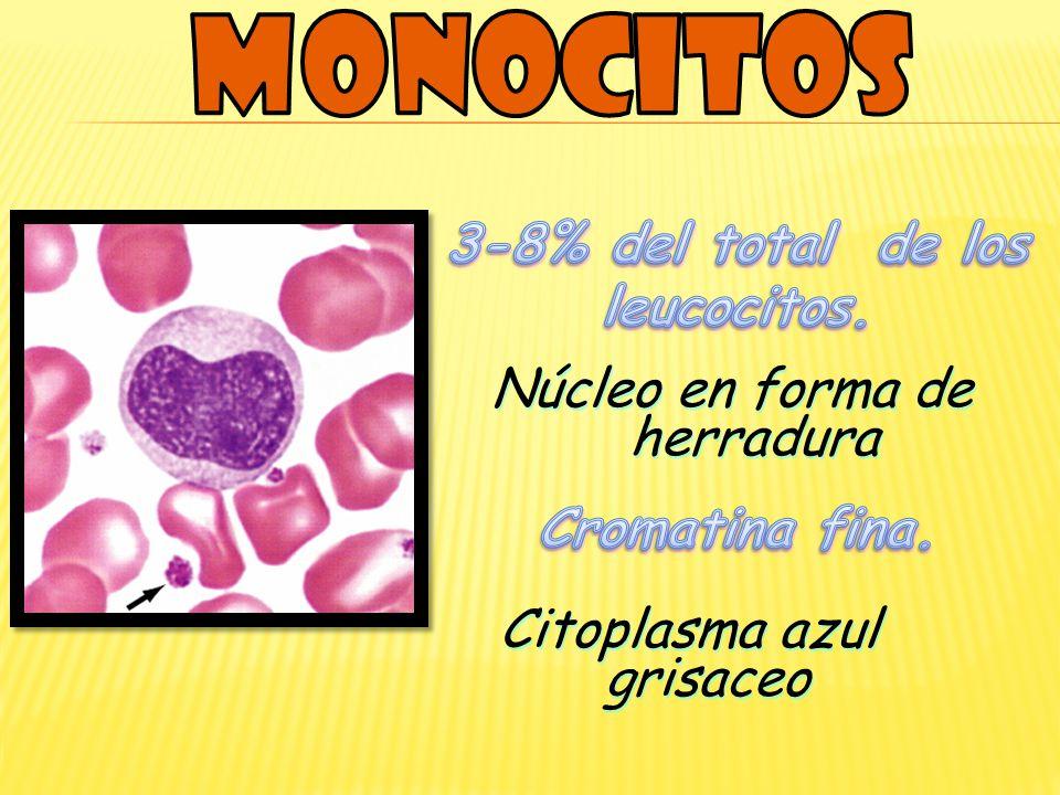 3-8% del total de los leucocitos.