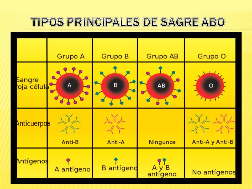 TIPOS PRINCIPALES DE SAGRE ABO