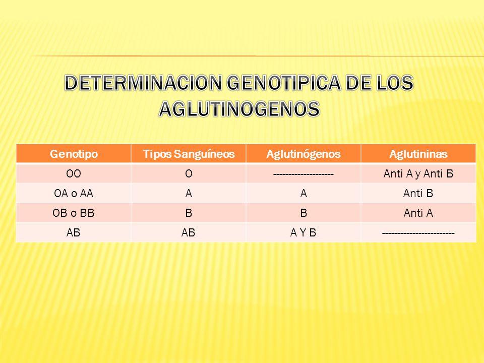 DETERMINACION GENOTIPICA DE LOS AGLUTINOGENOS