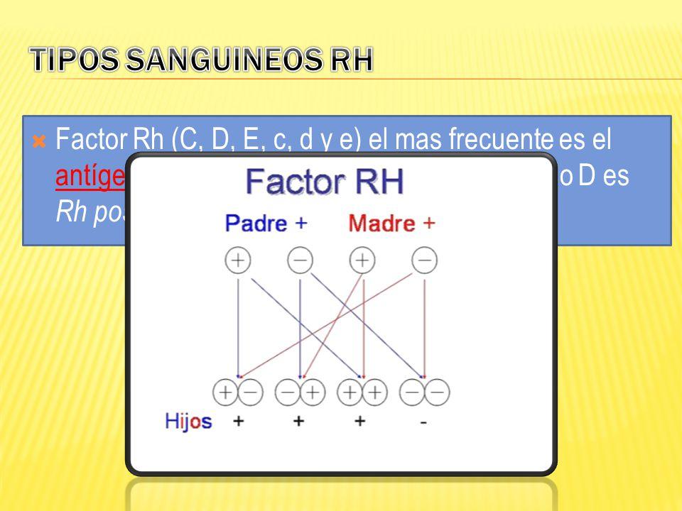 TIPOS SANGUINEOS RH