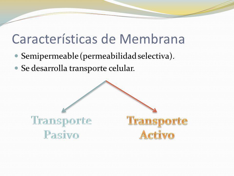 Características de Membrana