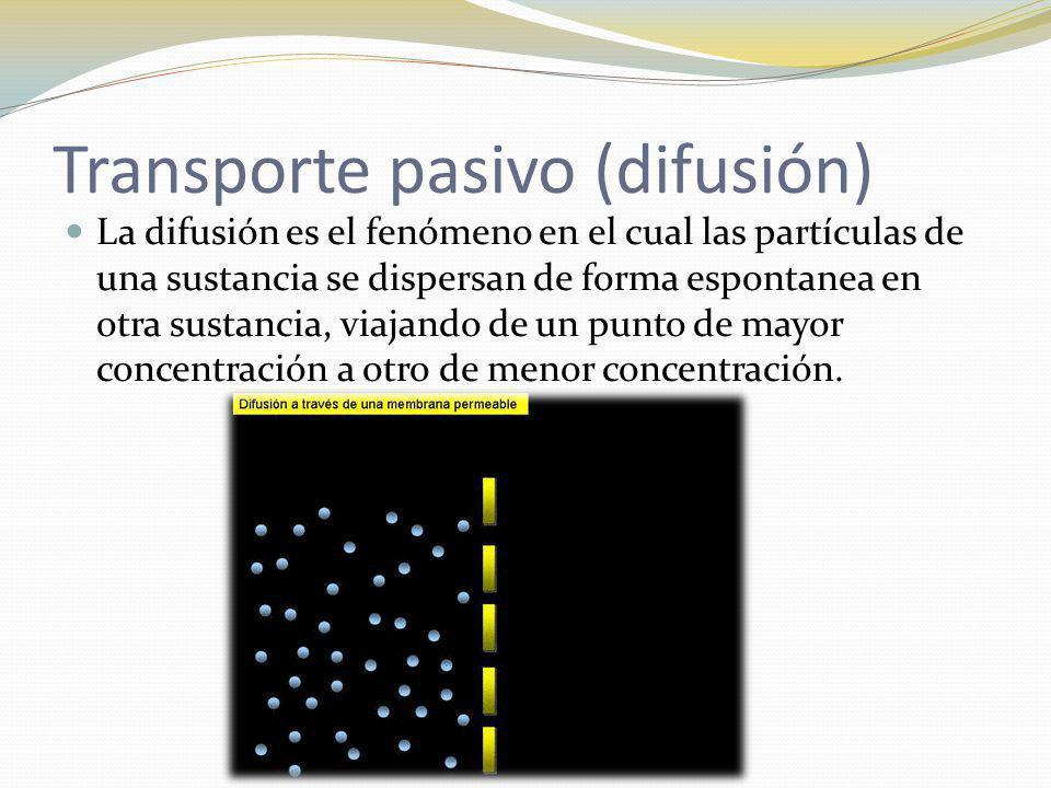 Transporte pasivo (difusión)
