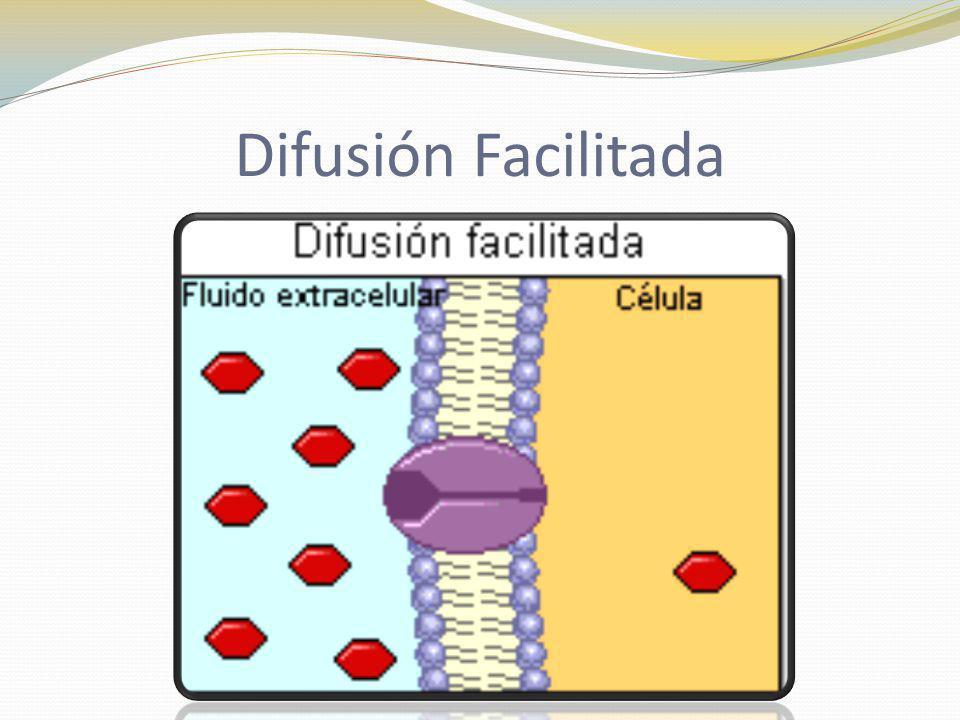 Difusión Facilitada