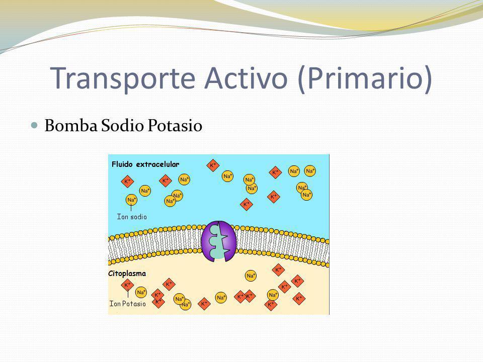 Transporte Activo (Primario)