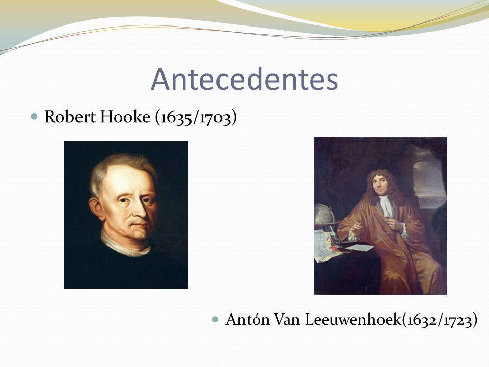 Antecedentes Robert Hooke (1635/1703) Antón Van Leeuwenhoek(1632/1723)