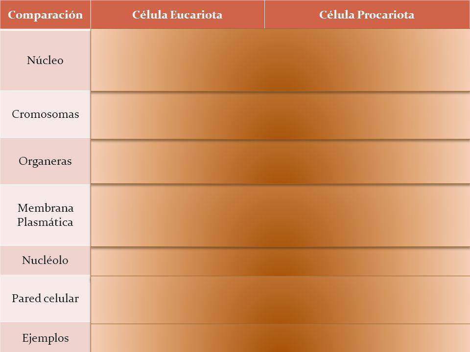 Comparación Célula Eucariota Célula Procariota