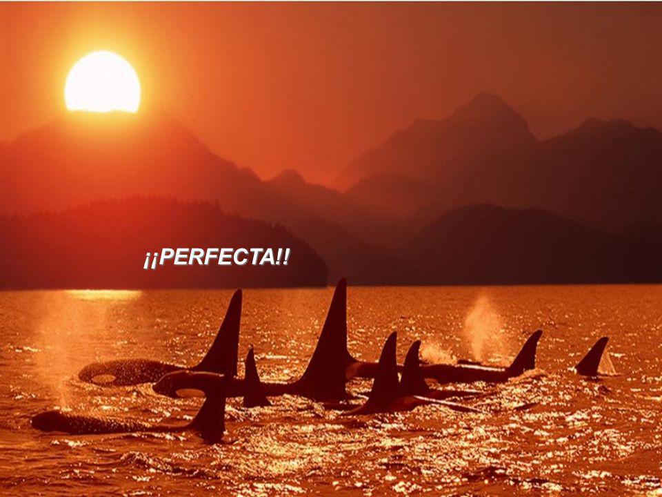 ¡¡PERFECTA!!