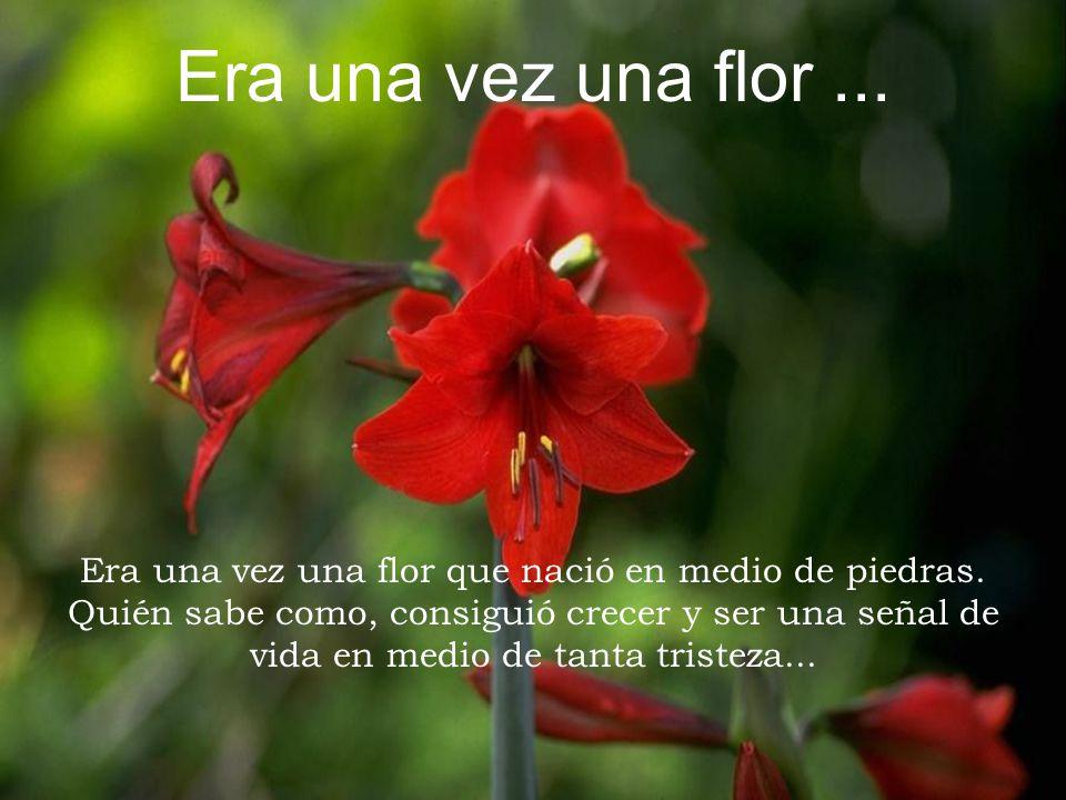Era una vez una flor ... Era una vez una flor que nació en medio de piedras. Quién sabe como, consiguió crecer y ser una señal de.