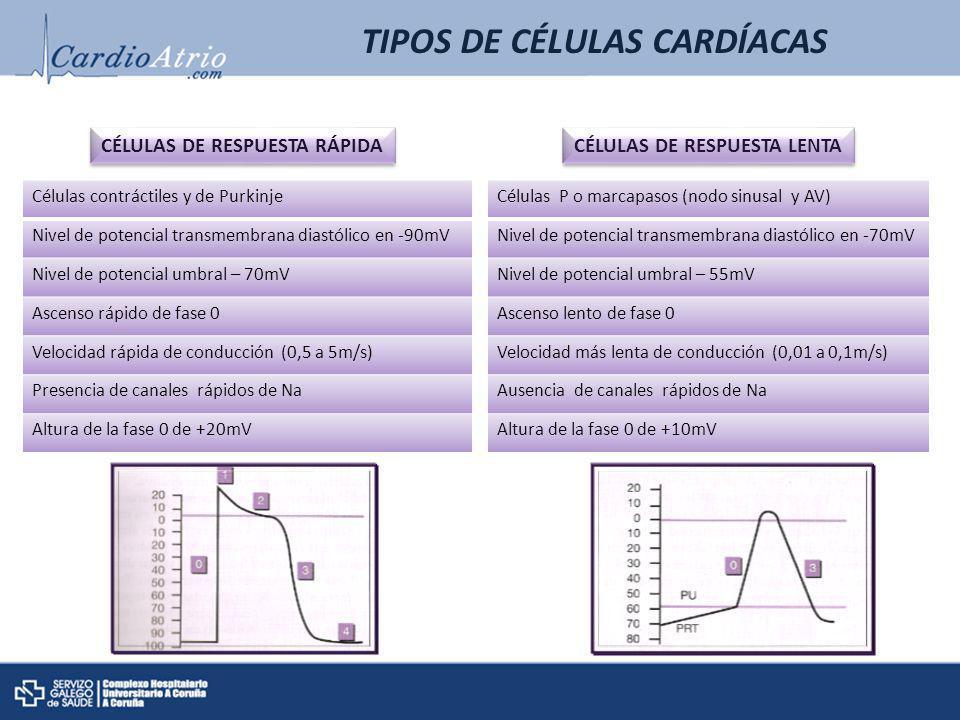 TIPOS DE CÉLULAS CARDÍACAS