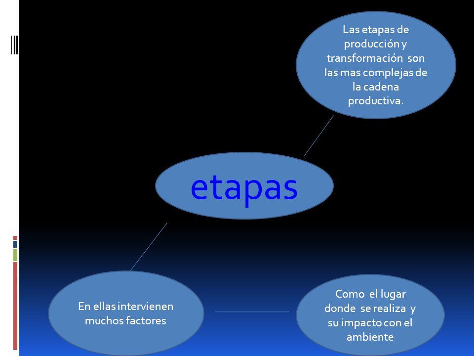 Las etapas de producción y transformación son las mas complejas de la cadena productiva.