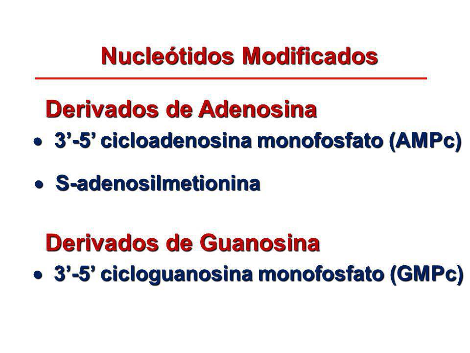 Nucleótidos Modificados