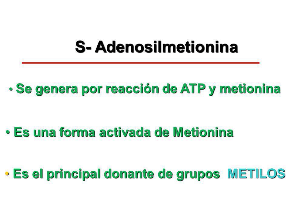 Es una forma activada de Metionina