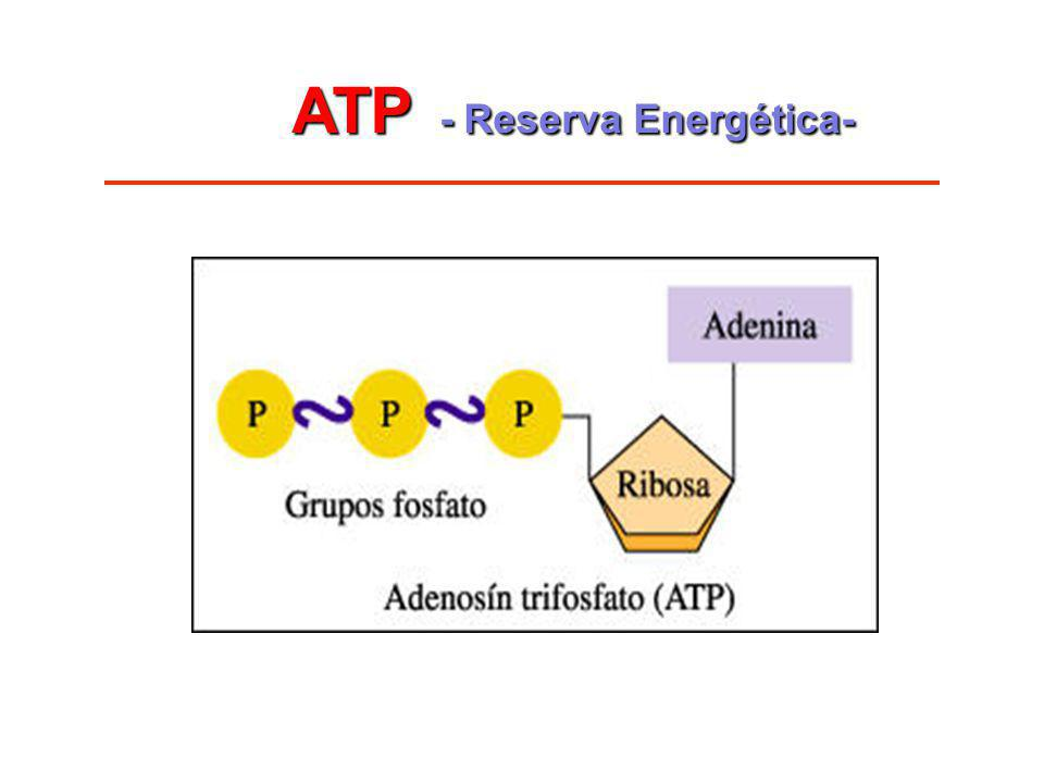 ATP - Reserva Energética-