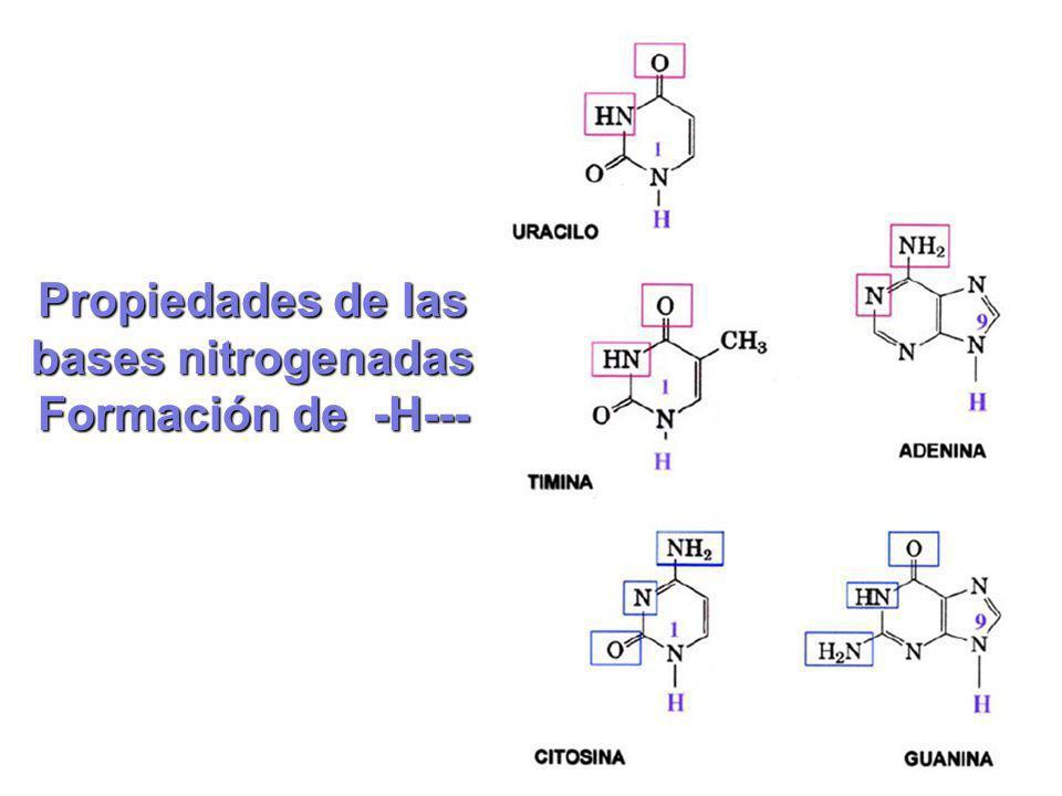 Propiedades de las bases nitrogenadas
