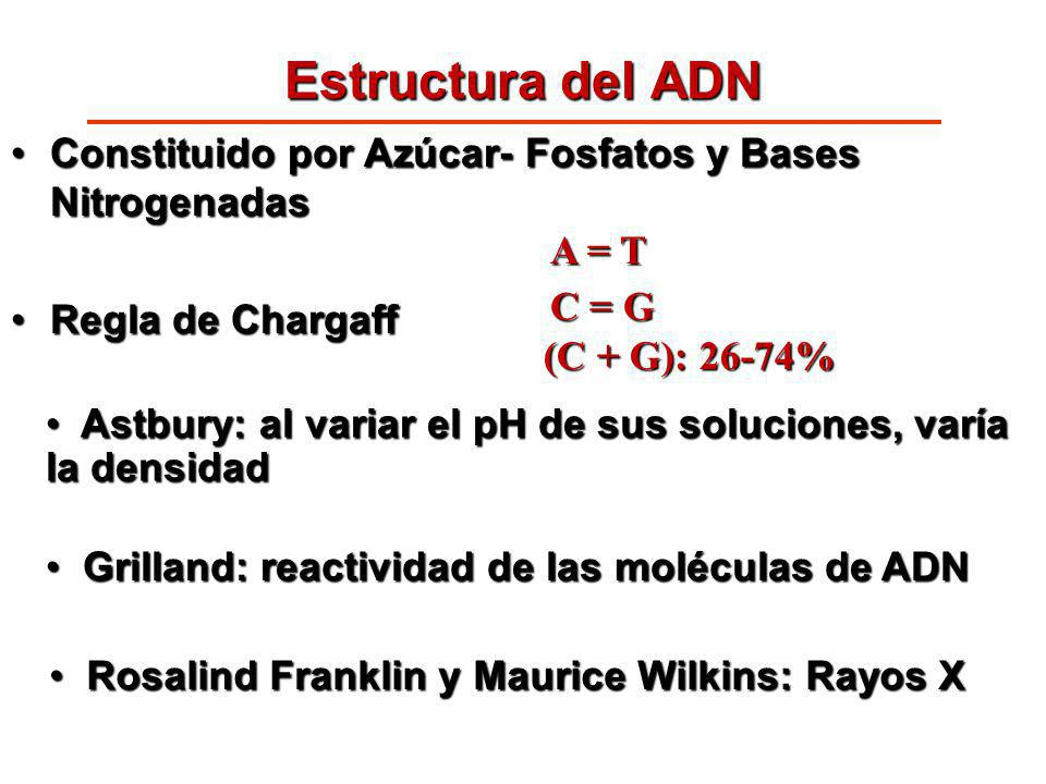 Estructura del ADN Constituido por Azúcar- Fosfatos y Bases Nitrogenadas. Regla de Chargaff. A = T.