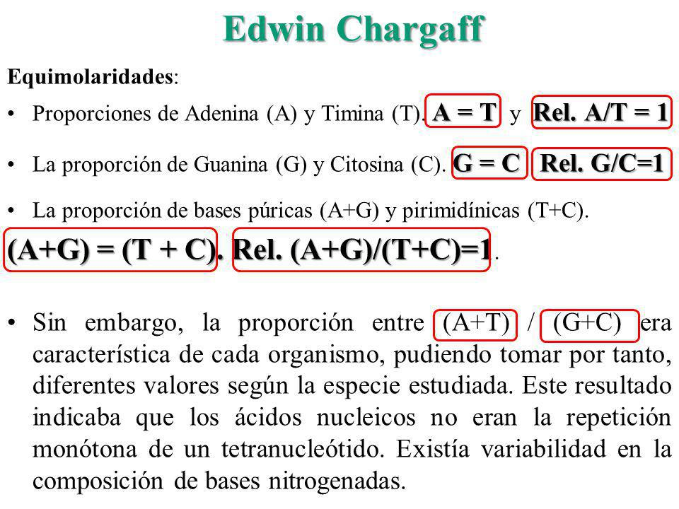 Edwin Chargaff (A+G) = (T + C). Rel. (A+G)/(T+C)=1.