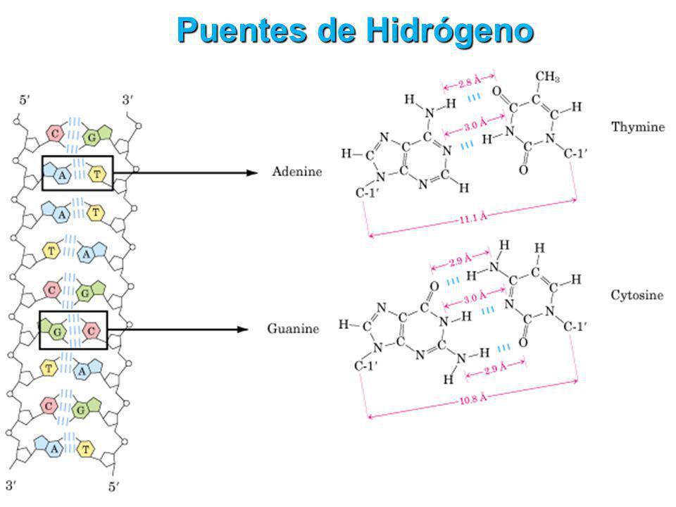 Puentes de Hidrógeno