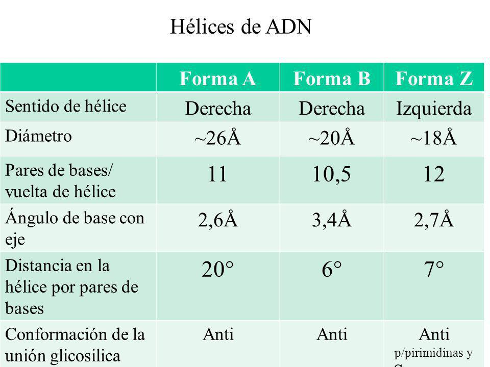 Anti p/pirimidinas y Syn p/purinas