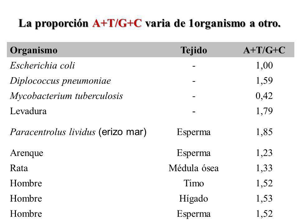 La proporción A+T/G+C varia de 1organismo a otro.