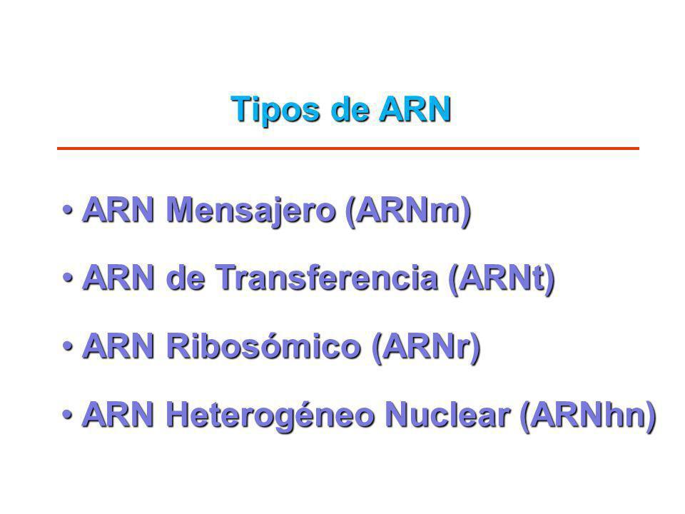 Tipos de ARN ARN Mensajero (ARNm) ARN de Transferencia (ARNt) ARN Ribosómico (ARNr) ARN Heterogéneo Nuclear (ARNhn)