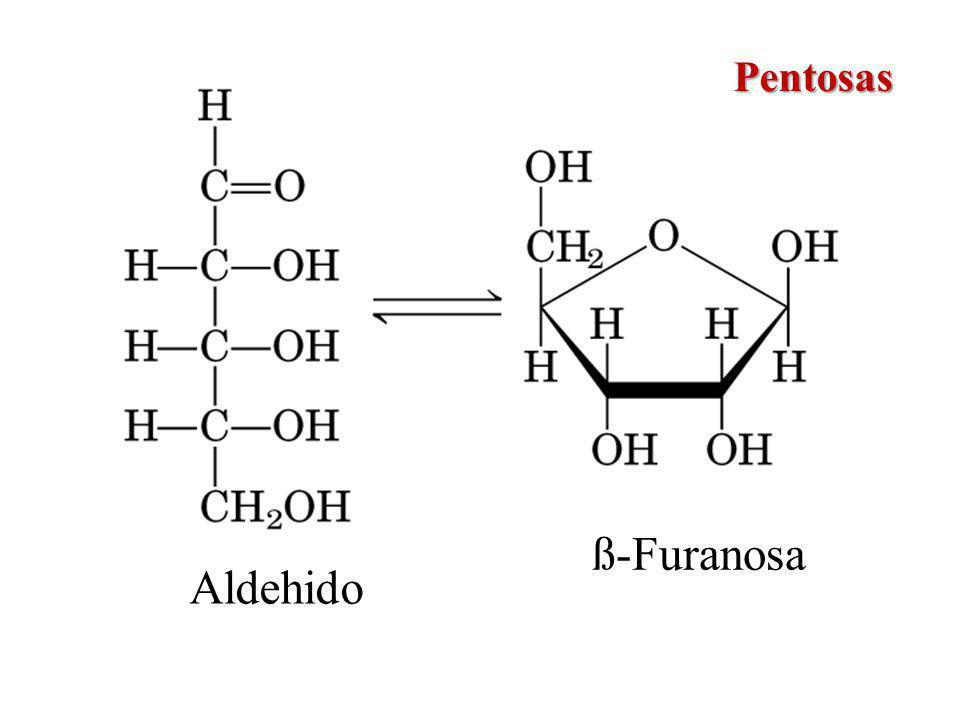 Pentosas ß-Furanosa Aldehido