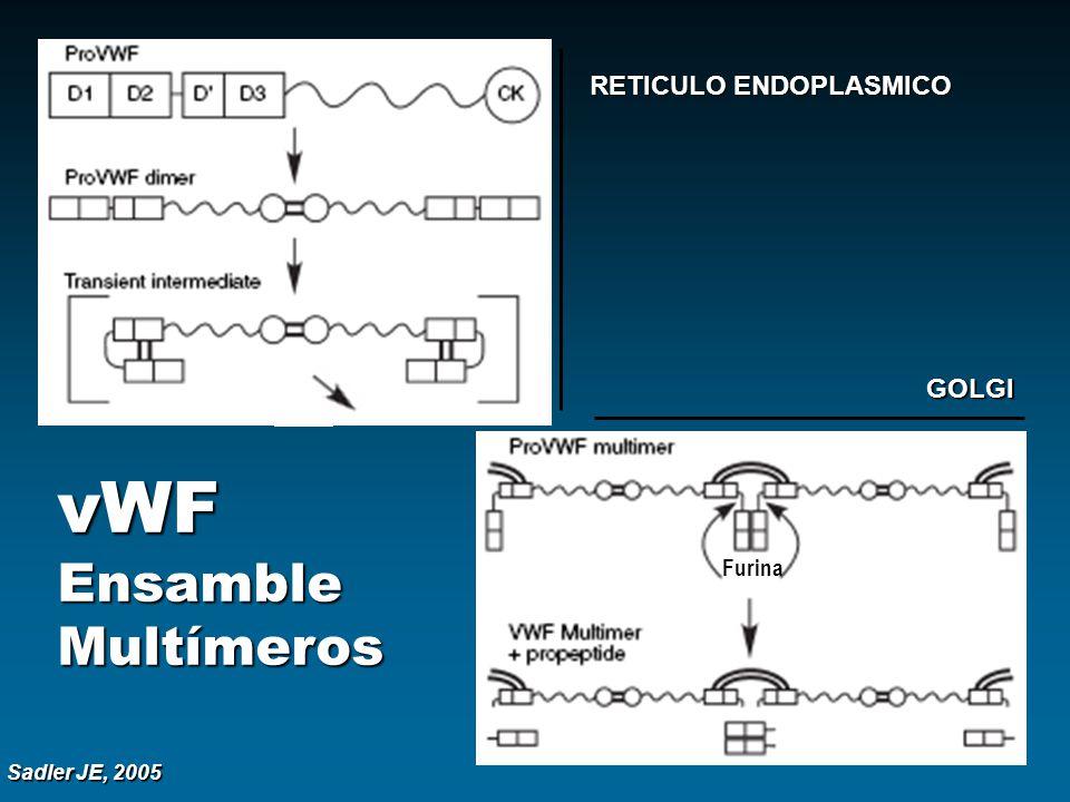 vWF Ensamble Multímeros