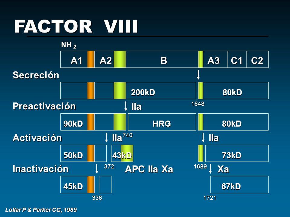 FACTOR VIII A1 A2 B A3 C1 C2 Secreción Preactivación Activación