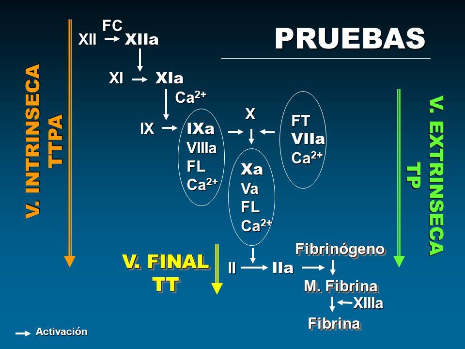 PRUEBAS V. INTRINSECA TTPA V. EXTRINSECA TP V. FINAL TT FC XII XIIa