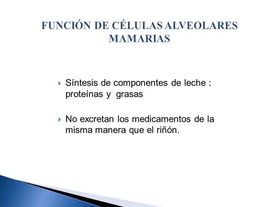 FUNCIÓN DE CÉLULAS ALVEOLARES MAMARIAS
